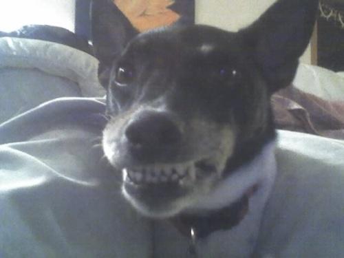 maya-teeth