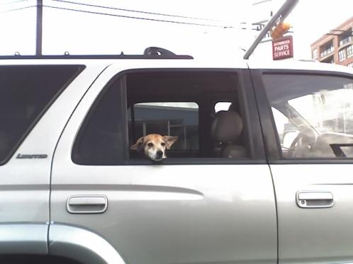 dog-truck