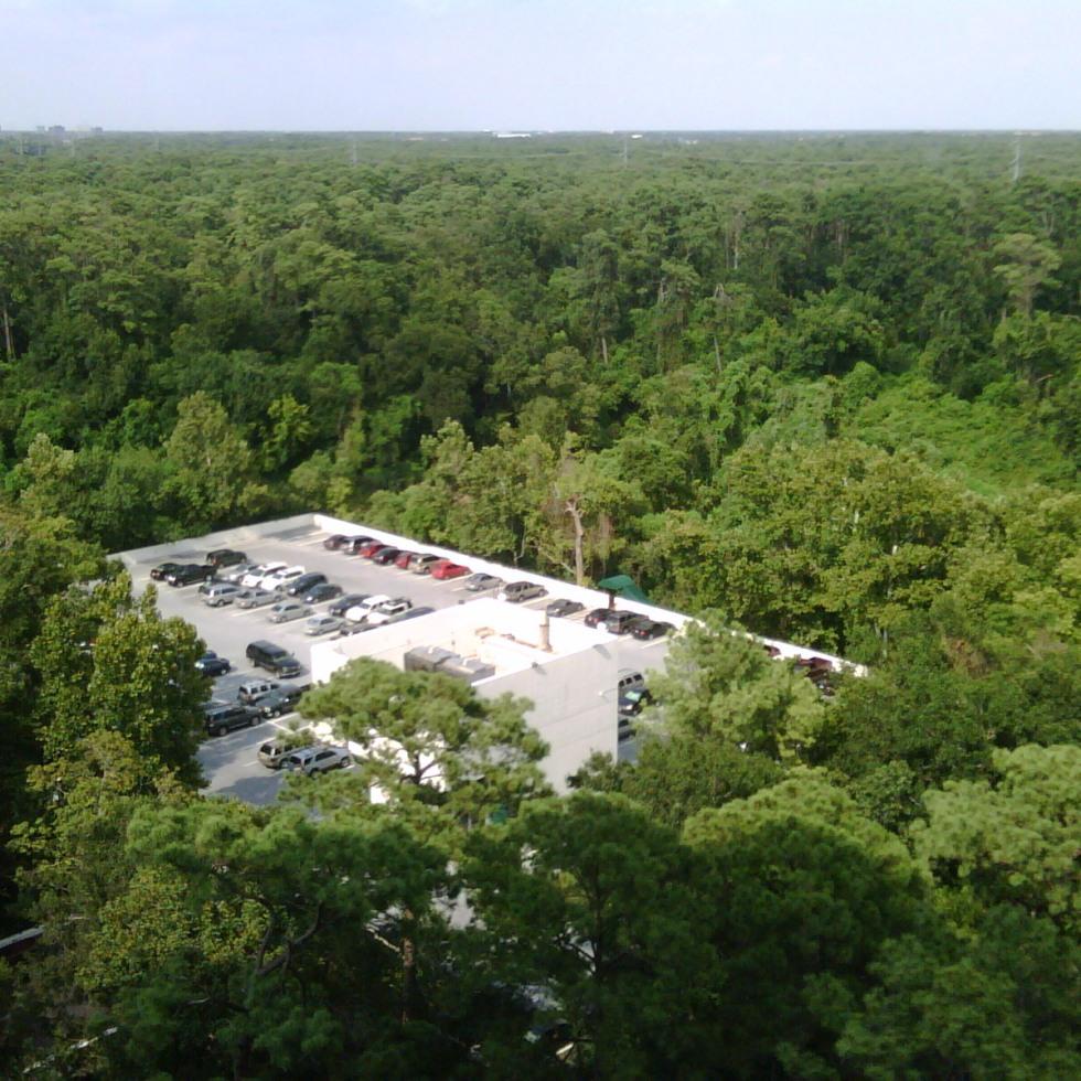 buffalo bayou tree top parking in memorial park