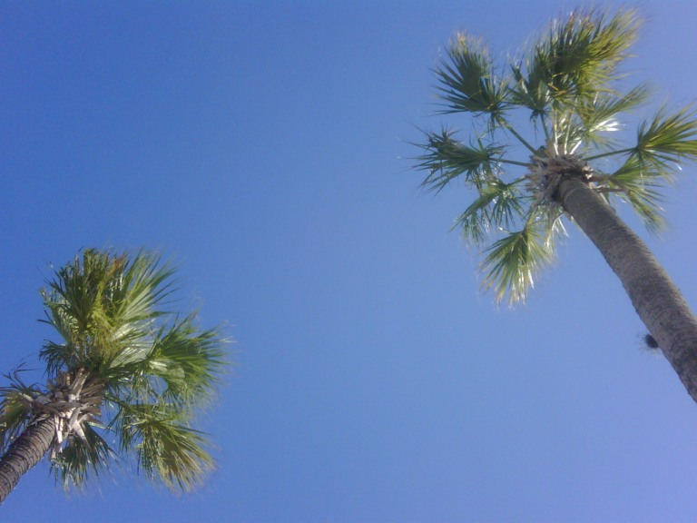 blue palm trees