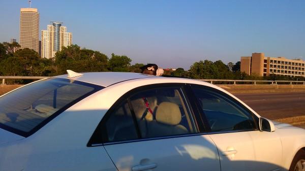 Driving down Shepherd