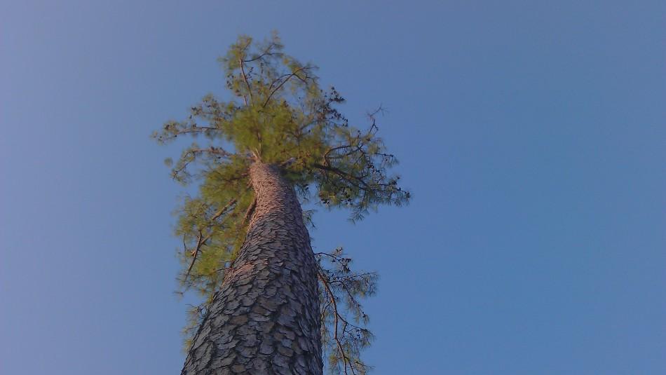 Memorial Park Trees